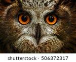 European Eagle Owl. Eurasian...