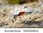 the emerald cockroach wasp or... | Shutterstock . vector #506404831