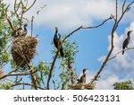 photo of nesting great... | Shutterstock . vector #506423131