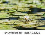 white water lilies in the... | Shutterstock . vector #506423221