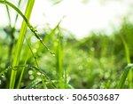 dew | Shutterstock . vector #506503687