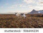 reindeers on tundra  spitsbergen | Shutterstock . vector #506644234