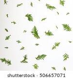 Leaves Pine  Flat Lay...