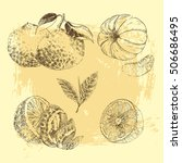 vector citrus fruit hand drawn... | Shutterstock .eps vector #506686495