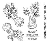 fennel vector set | Shutterstock .eps vector #506701507