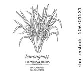 lemongrass vector illustration | Shutterstock .eps vector #506701531