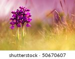 abstract background with spring ... | Shutterstock . vector #50670607