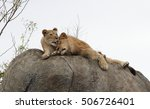 Lion And Lioness Resting On Th...