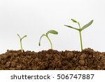 Young Green Plant Isolated On A ...
