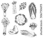 vector vegetable hand drawn...   Shutterstock .eps vector #506750695
