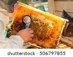 Beekeeper Consider Bees In...