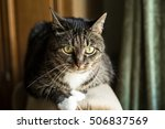 domestic young male cat. home... | Shutterstock . vector #506837569