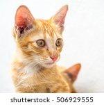little cute golden brown kitten ... | Shutterstock . vector #506929555