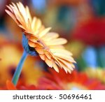 gorgeous looking orange flower with colorful background - stock photo