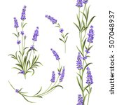 set of lavender flowers... | Shutterstock .eps vector #507048937