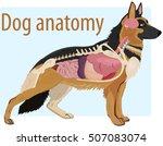 anatomy of domestic dog... | Shutterstock .eps vector #507083074