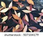Colorful Fallen Leaves Fallen...