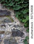 Ivy On Stone Wall Corner