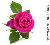 pink rose flower bouquet... | Shutterstock . vector #507161029