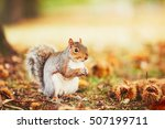Cute And Hungry Squirrel Eatin...
