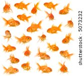 Goldfish In Front Of A White...