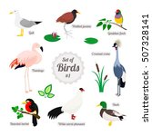 Set Of Birds. Colorful...