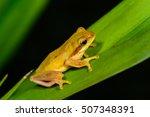 frog  tree  animal  nature ... | Shutterstock . vector #507348391