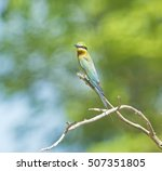 bee eater bird sitting on branch | Shutterstock . vector #507351805