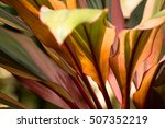 the colourful of leaves in...   Shutterstock . vector #507352219