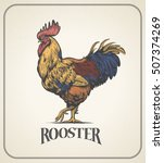 Rooster. Illustration Of The...