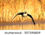 Sunrise Goose
