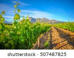 vibrant landscape with... | Shutterstock . vector #507487825