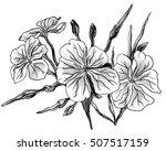 geranium flower blossom.... | Shutterstock . vector #507517159