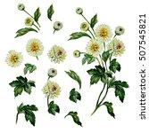 Chrysanthemum Set. Watercolor...