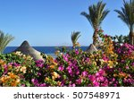 Bougainvillea  Palm Trees And...