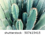 Blurred Green Cactus Closeup....