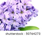 Macro of Hyacinth blossoms with shallow DOF. - stock photo