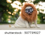 Stock photo funny face of pug dog with lion costume 507739027