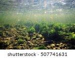 underwater scenery  algae ... | Shutterstock . vector #507741631