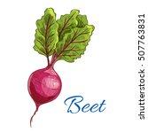 beet. fresh farm vegetable icon ... | Shutterstock .eps vector #507763831