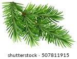 green fluffy pine branch....   Shutterstock . vector #507811915