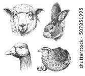 farm animals vintage set ...   Shutterstock .eps vector #507851995