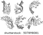 hand drawn vector set birds and ... | Shutterstock .eps vector #507898081