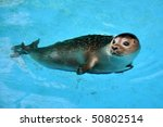 seal swimming in the pool | Shutterstock . vector #50802514