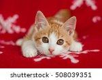 Stock photo ginger kitten resting on a red blanket 508039351