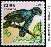 Small photo of CUBA - CIRCA 1989: A stamp printed in Cuba shows Amazonian Umbrellabird - Cephalopterus ornatus, circa 1989