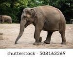elephant walking | Shutterstock . vector #508163269