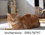 cat | Shutterstock . vector #508178797