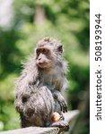 Monkey On Bali   Monkey Forest...
