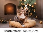 Stock photo tabby and happy cat christmas season new year holidays and celebration he plays with a 508210291
